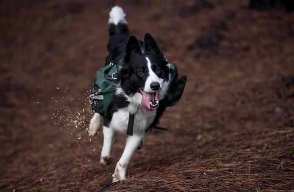 Dogs Are Rebuilding Chilean Forests [en]