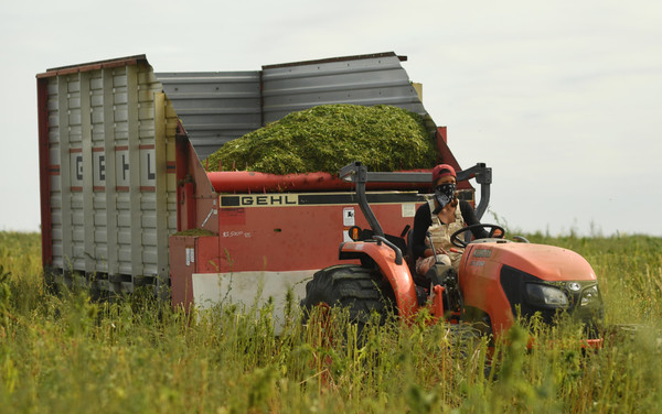 Federal rule on hemp production seen as watershed for growing Colorado industry