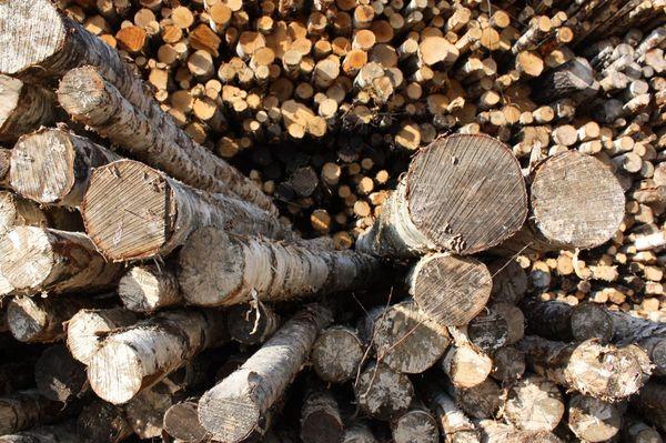 Fins hout