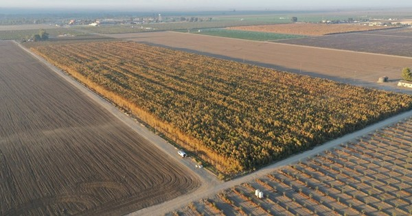 Authorities destroy 10 million plants they say were marijuana crops - Los Angeles Times