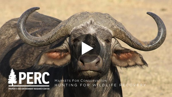 PERC emphasizes the necessity of trophy hunting in their latest video