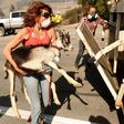 Hungry Goats Helped Save the Reagan Library From a California Wildfire | Smart News | Smithsonian
