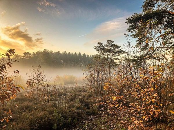 Esher woods 7:15 am 09/11