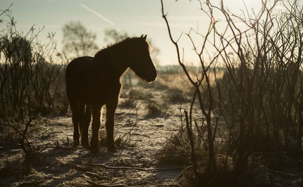 Pony. Photo by Annie Spratt.