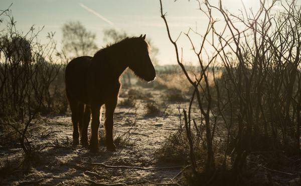 Pony. Photo by Annie Spratt.