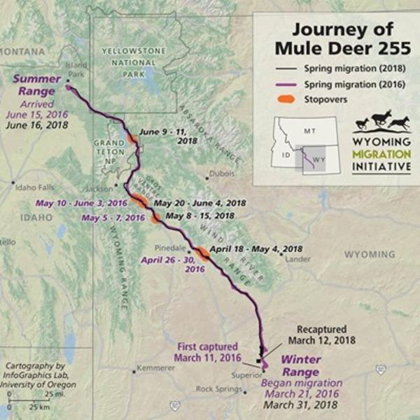 Wyoming mule deer make #4 longest land mammal migration globally