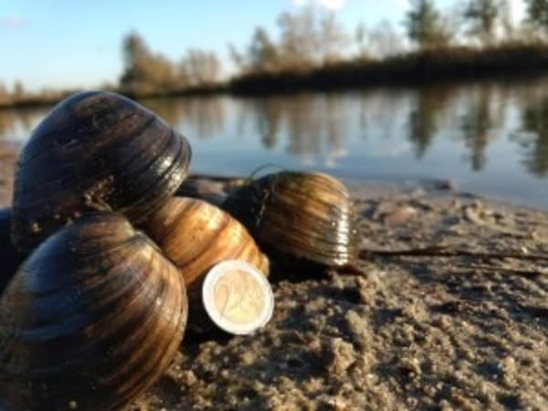 Huisbioloog David Sluis: 7 centimeter, een Nederlands Record! | De Orkaan
