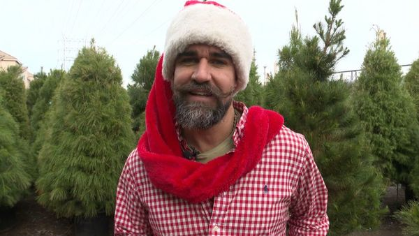 Scotty Claus Delivers Real Living Christmas Trees