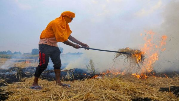 Over 34% drop in crop residue burning in Haryana
