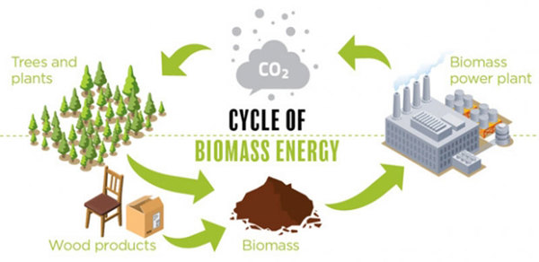 In 2019, kicking biomass out of clean energy club