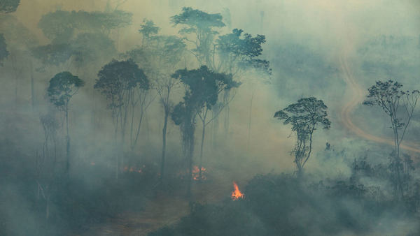 The year of uncontrollable rain forests fires all over the world