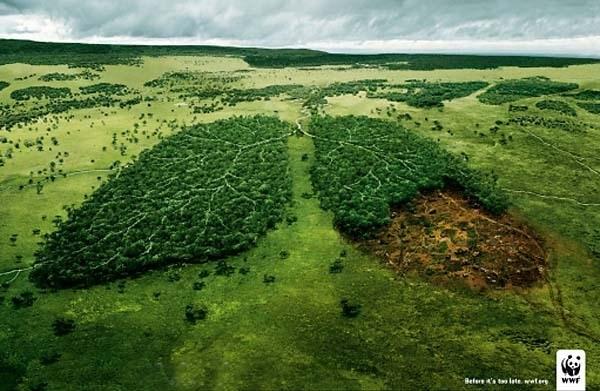 Véganisme, quel impact sur la planète ?