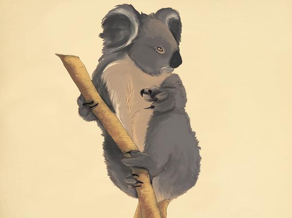 """Assessing Australia's """"ecological disaster"""""""