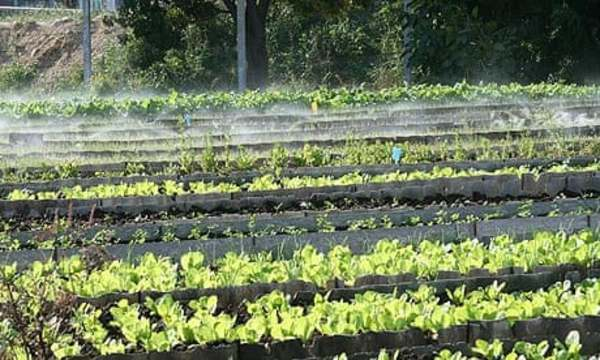 Cuba's organic revolution