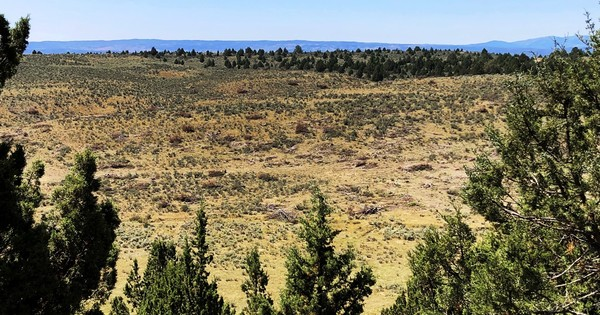Op-Ed: Pinyon and juniper woodlands define the West. Why is the BLM turning them to mulch?