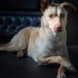 Verhuisdieren: Ravi zoekt nieuw thuis