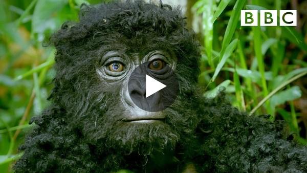 Observez ce robot bébé gorille infiltrer une troupe ! 🕵️🦍 | Spy In The Wild - BBC