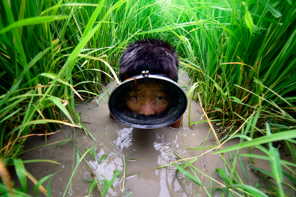 Dit Thaise jongetje vermaakt zich prima in het rijstveld.