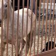Dead horse in Englewood sparks feud between owner, animal activist alderman