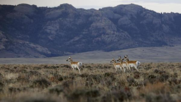 State leaders are looking to buy 1 million acres of land in southern Wyoming