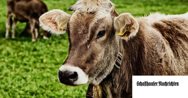 «Fleischkonsum muss halbiert werden»