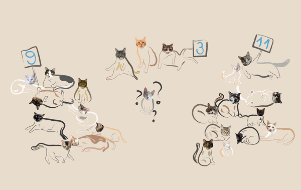 How the Iowa caucuses work - explained with cats