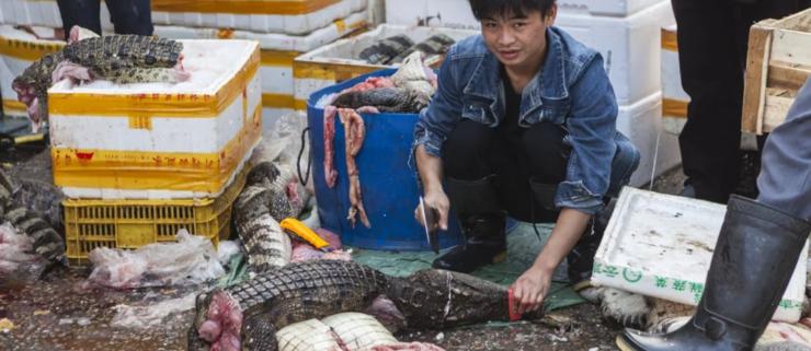 Kina bandlyser handel med vilde dyr