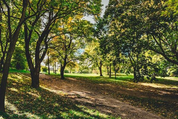 A lovely walk through the park on your way to work. Photo by Zeno Thysman.