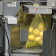 'My lemons go all over the world': why lemons are important to the Central Valley | YourCentralValley.com