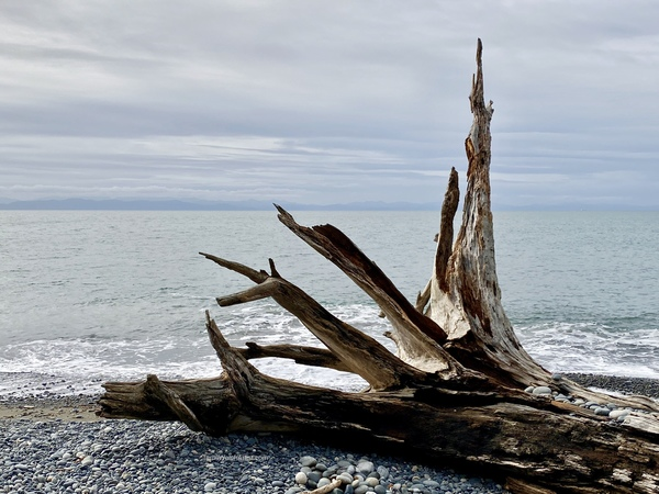 Driftwood on French Beach by Terrill Welch