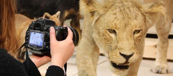 Safari photo et entrée gratuite au Musée d'histoire naturelle  - Gratis toegang en safarifoto in museum voor natuurwetenschappen