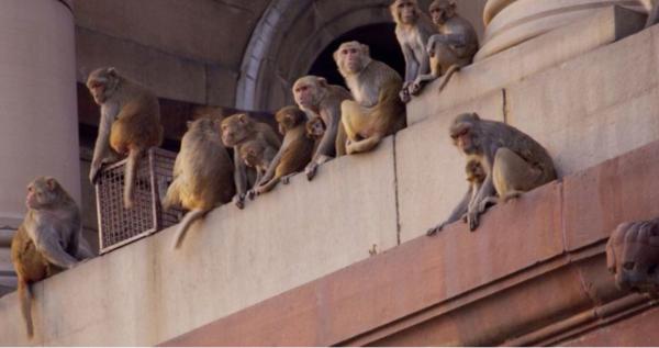 Just monkeying around. 🙊