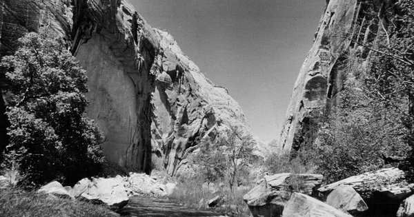 Cattle could return to Escalante tributaries under new Grand Staircase monument plan