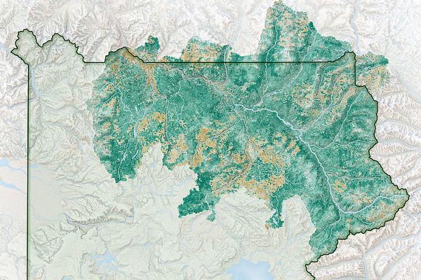 Satellite observations aid bison management