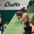Michèle Taffijn-du Bois wint op 's werelds grootste hondenshow