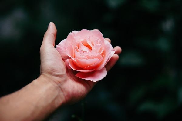 50 000 roses du commerce équitable pour les hôpitaux, les maisons de retraite et les EMS – Sehen und Handeln