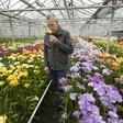Fresiakweker Theo Akerboom hoopt dat crisis ook iets goeds brengt: 'Dat bloemen niet zo worden rondgepompt over de aarde'