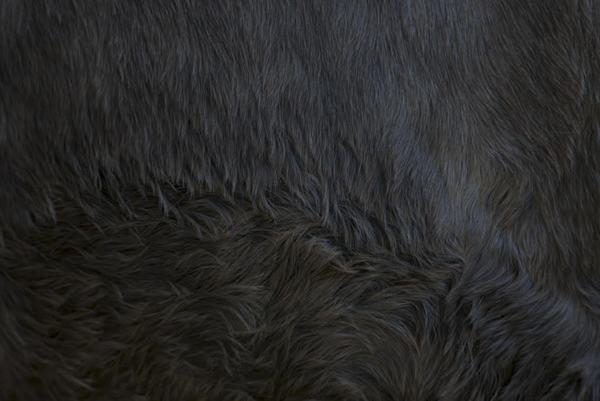 """#Trace 3, """"Sur la piste de l'homme animal"""". La toison de Toto. 2019. Hélène David"""