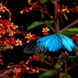 How to Avert the Chaos of the Digital Transformation Butterfly Effect