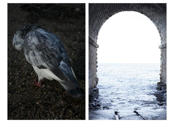 #Trace 3, « Sur la piste de l'homme animal ».  Le pigeon et l'anse Valmer. 2019. Hélène David