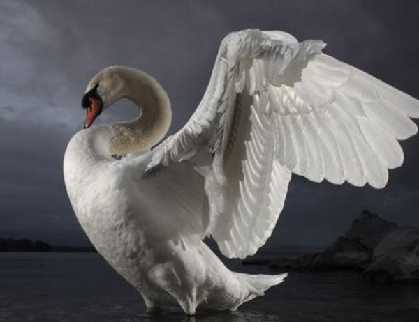 The Legaltech White Swan: Tips on scaling-up tech initiatives in the legal industry