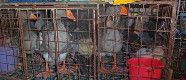 Animal advocates want illegal pet, meat marts shut
