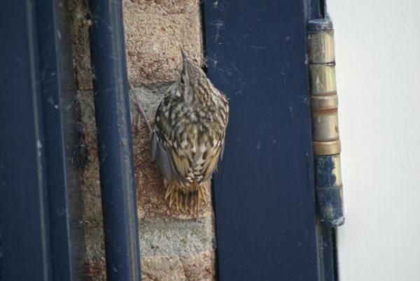 Ieder vogeltje zingt zoals hij gebekt is: Deel 3 | De Orkaan