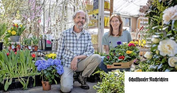 Frühlingspflanzen landen auf dem Kompost