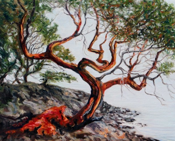 Arbutus Tree in the fog St. John's Point by Terrill | Artwork Archive