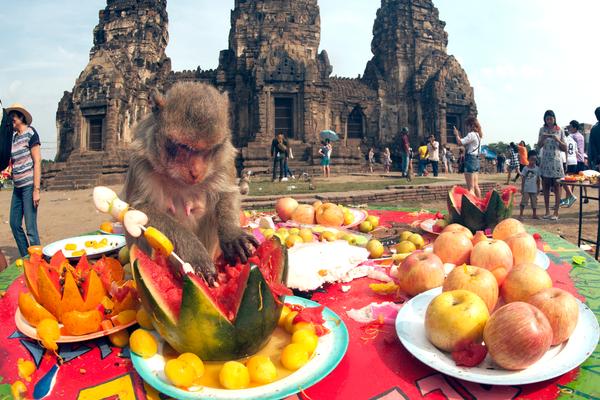 Het jaarlijkse apenbuffet in de Thaise stad Lopburi.