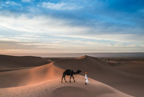 """A camel is perhaps a good metaphor of how we should structure our lives and organizations in anticipation of bad times, i.e. lean, slow and steady, and with enough reserves for the journey ahead in case there is no """"water"""" for a long part of the journey. Only problem is going through life like this sounds boring 🤔"""