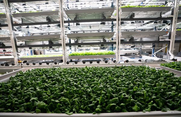 Vertical farms see surge in demand for greens grown indoors