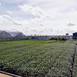 650 miljoen euro steun voor onder andere sierteeltsector