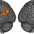 Jak działa nasz mózg gdy mamy styczność z dowodami sprzecznymi z naszymi poglądami politycznymi?